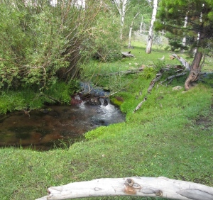 A spring fed cool mountain stream invites relaxation,  Photo courtesy of Paul.