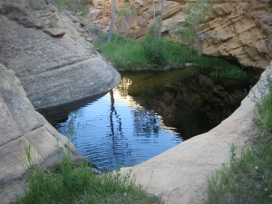 A refreshing water pocket nestled into a desert canyon.