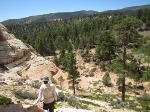 The ponderosa life zone is a great place to beat the heat in July. HIgher elevation means cooler temperatures and the Ponderosa Pines mean plenty of shade.