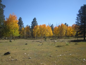 Fall brings the changing of of the colors to Boulder Mountain.  Conditions are near perfect for hiking.